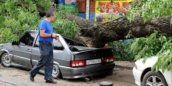 Как найти виновного в падении дерева на машину?